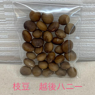 枝豆 越後ハニーの種 30粒(自家採種)(野菜)