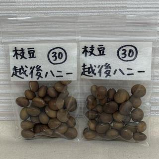 お得!枝豆 越後ハニーの種 60粒(自家採種)(野菜)