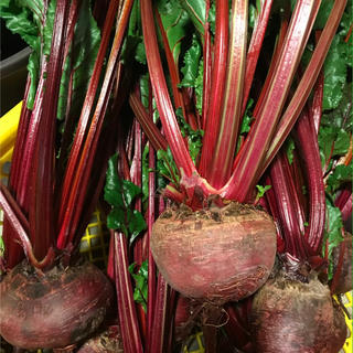 無農薬ビーツ 3kg以上5kg未満(野菜)