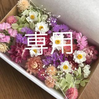tomayu様専用☆プリザーブド&ドライフラワー花材MIX(ドライフラワー)
