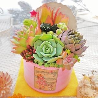 多肉植物 贅沢寄せ植え 黒猫にゃんこ(ФωФ)babyピンクリメ鉢×レトロガール(その他)