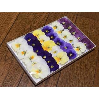 お花屋さんが作った掘るを彩る可愛いビオラのドライフラワーお詰め合わせ  23(ドライフラワー)