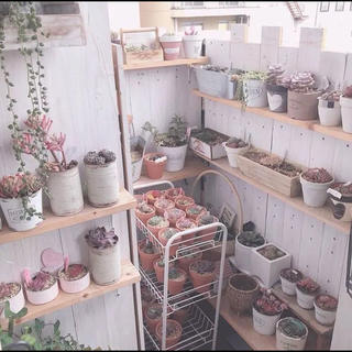 ②多肉植物 韓国葉挿し  25種類(29枚)(その他)