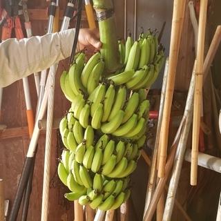 無農薬 沖縄産バナナ