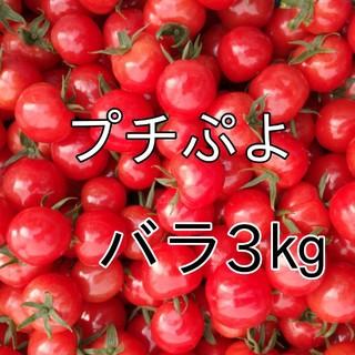 宝石のような煌めきを放つプチぷよ3㎏(箱込み)★008ミニトマト