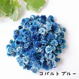 かすみ草 ドライフラワー・コバルトブルー(ドライフラワー)
