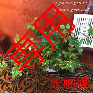 光触媒 人工観葉植物 イングランドアイビー3246