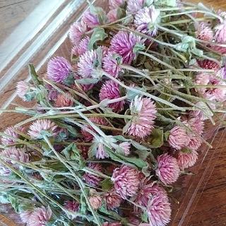 ドライフラワー 千日紅 茎付き 100本 ピンク ミックスサイズ ハンドメイド(ドライフラワー)
