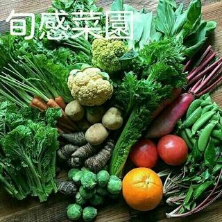 新鮮野菜セット80-②(野菜)
