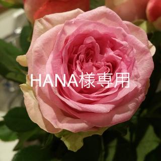 HANA様専用ページ(ブラ&ショーツセット)