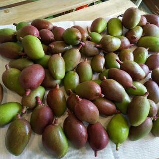 宮崎県産グリーンマンゴー(2kg)(フルーツ)
