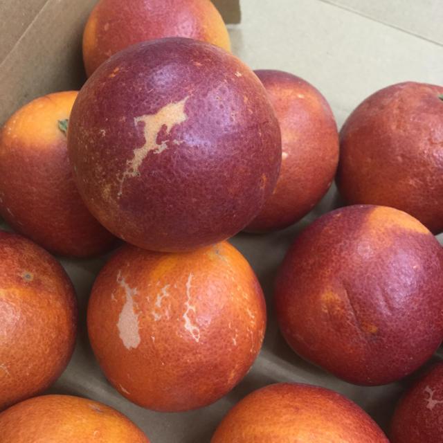 愛媛産ブラッドオレンジ(モロ) 食品/飲料/酒の食品(フルーツ)の商品写真