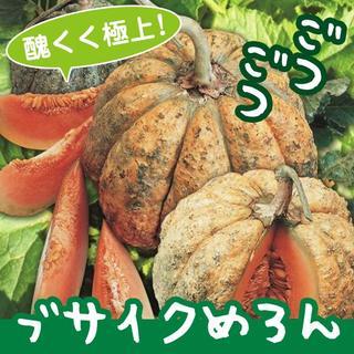 ブサイクめろんの種10粒 ~醜く極上に美味しいイタリアンメロン!~(野菜)