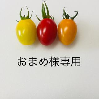 おまめ様 専用 ミニトマト3種 4kg(野菜)
