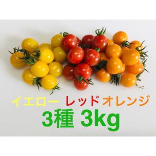 農家直送 ミニトマト3種 3kg 食べ比べセット(野菜)