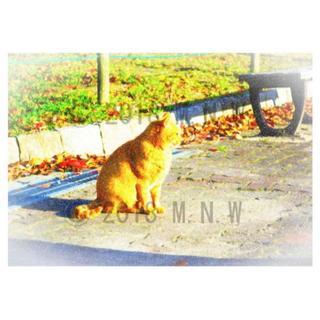 猫 (ネコ) 1 色鉛筆画風 CG画 A4サイズ(アート/写真)