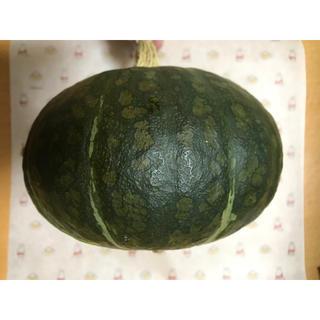 最もポピュラーなカボチャ 黒皮栗カボチャの種 20粒です(野菜)