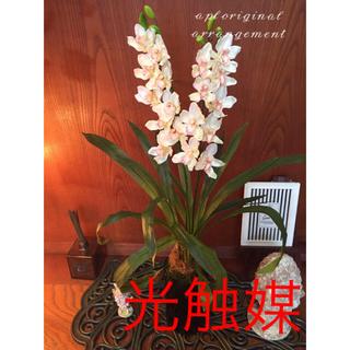 光触媒 人口観葉植物 シンピジューム8060