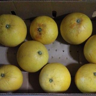 晩白柚 ばんぺいゆ 家庭用2個(フルーツ)