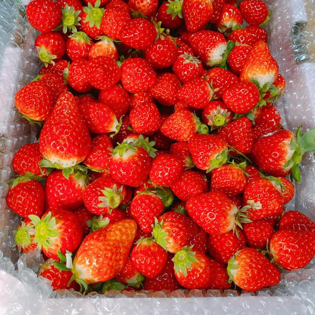 規格内、規格外さがほのか2kg●クール便●いちご苺イチゴ 食品/飲料/酒の食品(フルーツ)の商品写真