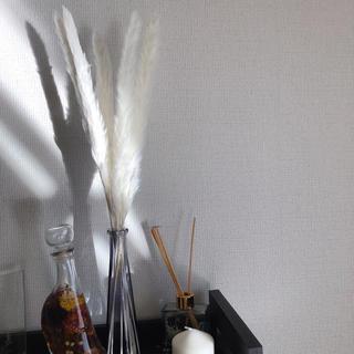 大人気 パンパスグラス ホワイト ドライフラワー 花材 ウエディング インテリア(ドライフラワー)