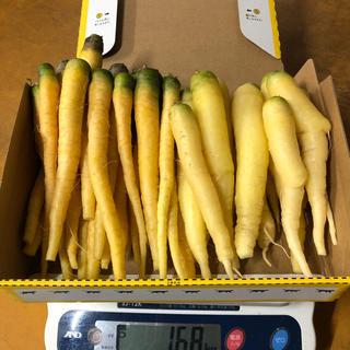 彩りフルーツにんじん訳ありB品イエロー、ホワイト1.6kg以上。無農薬野菜(野菜)