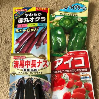 夏野菜 種子 セット F1品種 プランター栽培 4〜6個分(プランター)