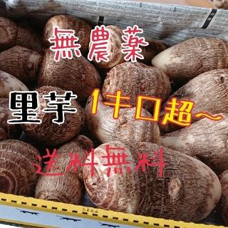 無農薬 里芋 1キロ超☆送料無料(野菜)