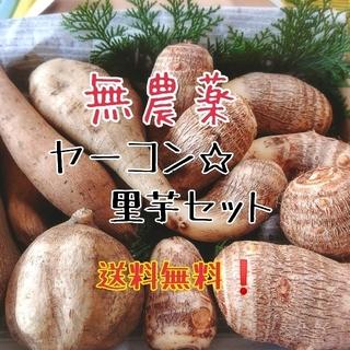 無農薬 ヤーコン☆里芋セット 送料無料(野菜)