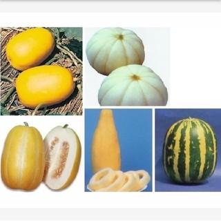 マクワウリ種●奈良一号まくわ 菊メロン 銀泉まくわ バナナまくわ タイガーメロン(野菜)