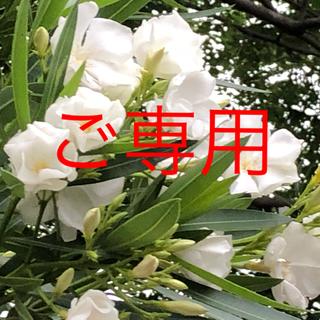 ニトリ(ニトリ)のキイロイトリ様ご専用(ダイニングチェア)