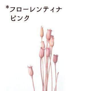 フローレンティナ ピンク 5本(ドライフラワー)