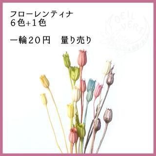 【1本20円】フローレンティナ 量り売り(ドライフラワー)