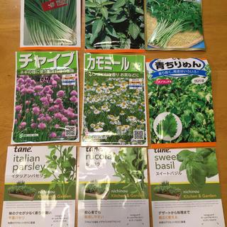 野菜の種 ハーブの種 6種類 家庭菜園 ガーデニング向け(野菜)