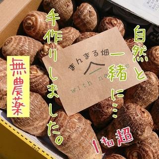 無農薬 里芋 1キロ超~ 送料無料❗(野菜)