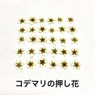 【30枚】コデマリの押し花(ホワイト)(ドライフラワー)