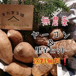 無農薬 ヤーコン&里芋セット 送料無料❗(野菜)