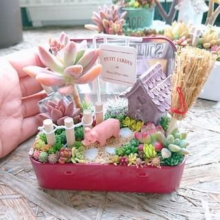 kumiko様 専用  多肉植物  寄せ植え(その他)