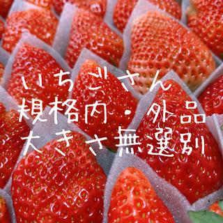 ○いちごさん○ イチゴ 苺(フルーツ)