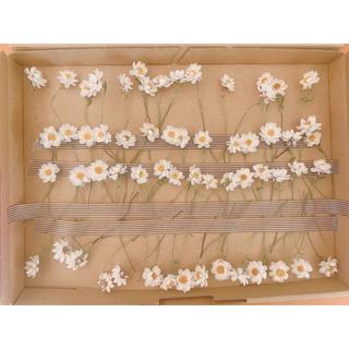 ドライフラワー 花かんざしのドライフラワー 茎付き60本(ドライフラワー)