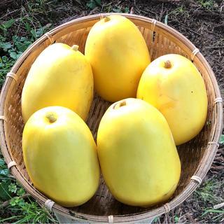 固定種マクワ瓜の種 金俵20粒 & 銀泉20粒(フルーツ)
