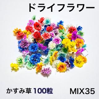 【100粒】ドライフラワー(かすみ草)MIX35(ドライフラワー)