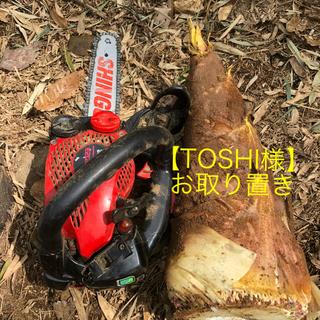 早掘り筍 【TOSHI様】お取り置き(野菜)