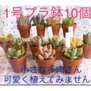 ミニプラ植木鉢 1寸  1号10個〜  ハンドメイド材料にも(その他)