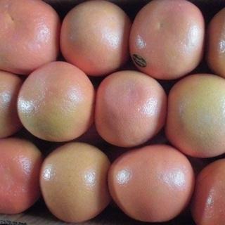 本日限りアメリカ産中玉赤グレープフルーツ40個(フルーツ)