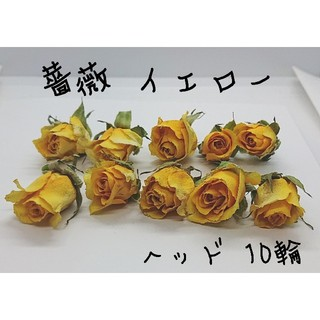 ミニ薔薇♡ドライフラワー イエロー10輪(ドライフラワー)