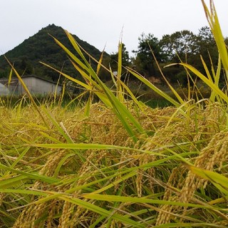 お米農家のお米と米味噌セット(米/穀物)