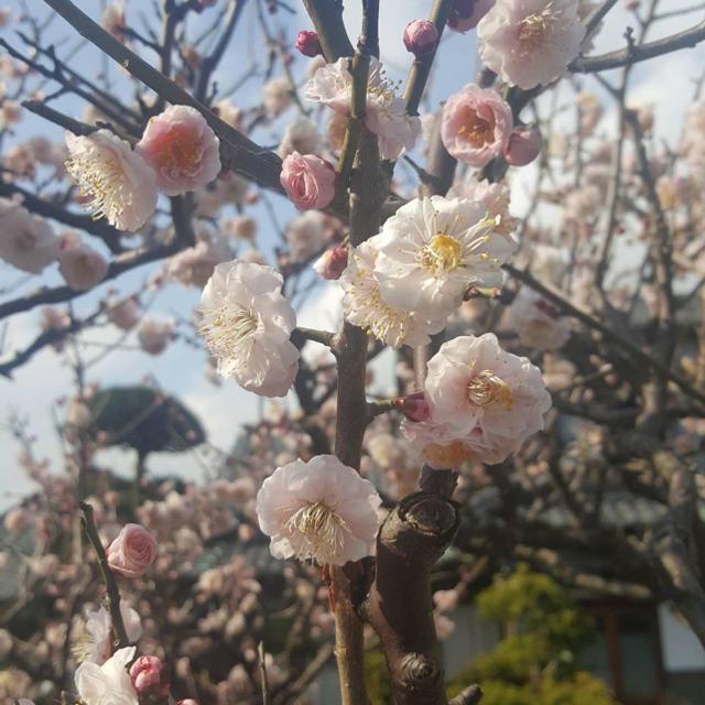 龍神お守り☆症状別シリーズ ハンドメイドの生活雑貨(雑貨)の商品写真