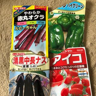 夏野菜 種 セット プランター栽培 F1種子 プランター4~6個分(プランター)