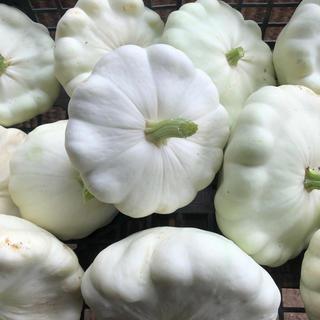 UFOズッキーニの種 15粒(野菜)
